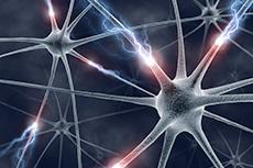 Neurotrophins
