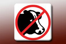 Animal-Free Cytokines