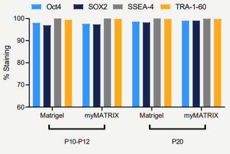 Flow cytometry analysis of stemness markers Oct4, Sox 2, SSEA-4 and Tra1-60 on myMATRIX iPSC and Matrigel. Shown is the percentage of the cells in the population that express the markers in passages P10- P14 as well as in P20, after long-term culture.